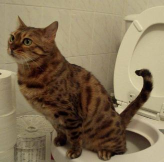 5 Common Cat Behaviors & Why They Do It (Pet Care)